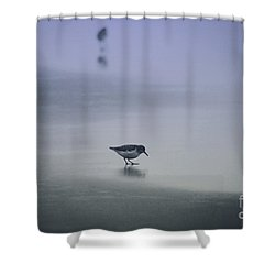 Sanderling Shower Curtain by Sheila Ping