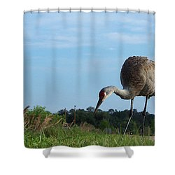 Sandhill Crane 018 Shower Curtain