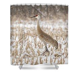 Sandhill Crane 2016-3 Shower Curtain