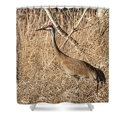 Shower Curtain featuring the photograph Sandhill Crane 2016-7 by Thomas Young