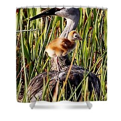 Sandhill Crane And Colt Shower Curtain