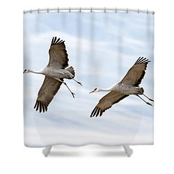 Sandhill Crane Approach Shower Curtain by Mike Dawson