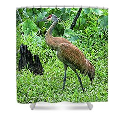 Shower Curtain featuring the digital art Sandhill Crane At Sandy Ridge Reservation by Mark Madere