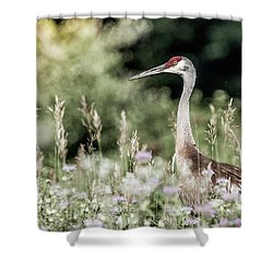 Sandhill Crane Shower Curtain by Cathy Cooley