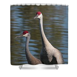 Sandhill Crane Couple By The Pond Shower Curtain by Carol Groenen