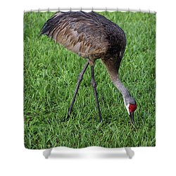 Shower Curtain featuring the photograph Sandhill Crane II by Richard Rizzo