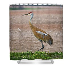 Shower Curtain featuring the photograph Sandhill Crane In Profile by Bill Pevlor