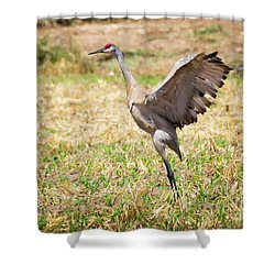 Shower Curtain featuring the photograph Sandhill Crane Morning Stretch by Ricky L Jones