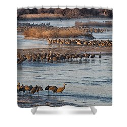 Sandhill Crane Platte River  Shower Curtain