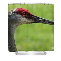 Sandhill Crane Profile Shower Curtain by Carol Groenen
