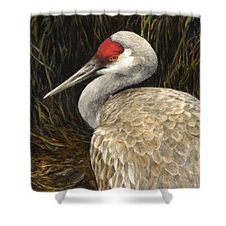 Shower Curtain featuring the painting Sandhill Crane - Realistic Bird Wildlife Art by Karen Whitworth