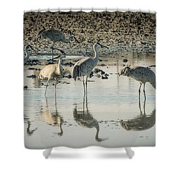 Sandhill Crane Reflections Shower Curtain