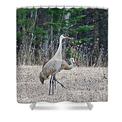 Shower Curtain featuring the photograph Sandhill Cranes 1166 by Michael Peychich