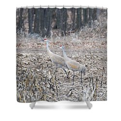 Shower Curtain featuring the photograph Sandhill Cranes 1171 by Michael Peychich
