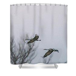Sandhill Cranes Flying Shower Curtain