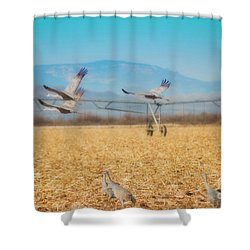 Sandhill Cranes In Flight Shower Curtain