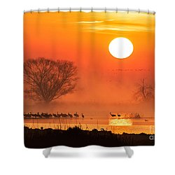 Sandhill Cranes In The Misty Sunrise Shower Curtain