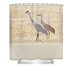 Shower Curtain featuring the photograph Sandhill Cranes Of Montana by Jennie Marie Schell