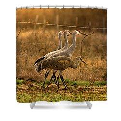 Sandhill Cranes Texas Fence-line Shower Curtain by Robert Frederick
