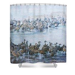 Sandhill Cranes Texture Shower Curtain