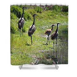 Sandhill Family By The Pond Shower Curtain by Carol Groenen
