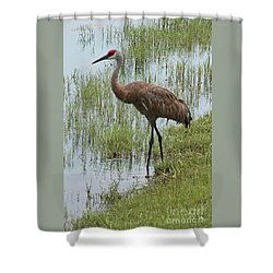 Sandhill In The Marsh Shower Curtain
