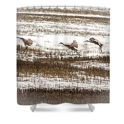 Shower Curtain featuring the photograph Sandhill Touch Down by Daniel Hebard