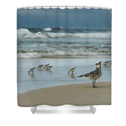 Sandpiper Beach Shower Curtain by Renee Hardison