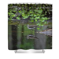 Shower Curtain featuring the photograph Sandpiper In The Smokies II by Douglas Stucky