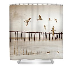 Sandpipers In Sepia Shower Curtain