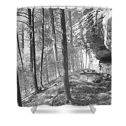Sandstone Steps In The Woods Shower Curtain