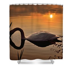 Sandy Water Park 6 Shower Curtain