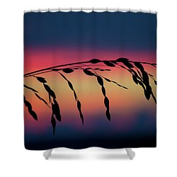Shower Curtain featuring the photograph Sanibel Sea Oats by Melanie Moraga