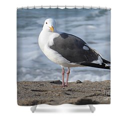 Santa Monica Seagull Shower Curtain