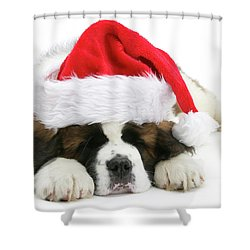 Santa's Snoozing Saint Bernard Shower Curtain