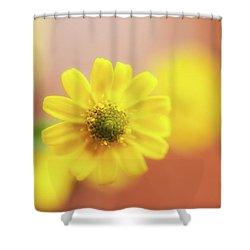Sanvitalia  Shower Curtain by Wayne Molyneux