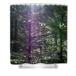 Saplings In The Sun Shower Curtain