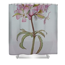 Saponaria Shower Curtain by Ruth Kamenev