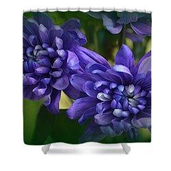 Sapphire Blue Chrysanthemums Shower Curtain