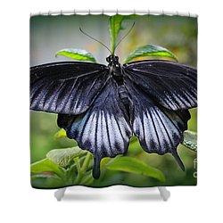 Sapphire Blue Swallowtail Butterfly Shower Curtain