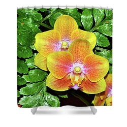 Sara Gold Orchids 003 Shower Curtain by George Bostian