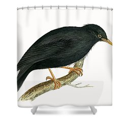 Sardinian Starling Shower Curtain by English School