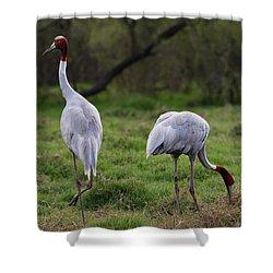 Sarus Crane - Pair For Life Shower Curtain