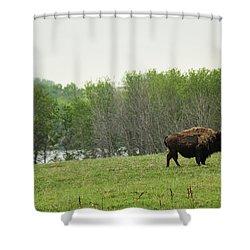 Saskatchewan Buffalo Shower Curtain by Ryan Crouse