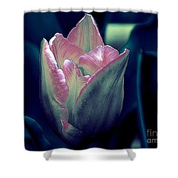 Shower Curtain featuring the photograph Satin by Elfriede Fulda