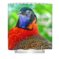 Satyr Tragopan  Shower Curtain