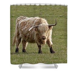 Sauvie Island Cow Shower Curtain