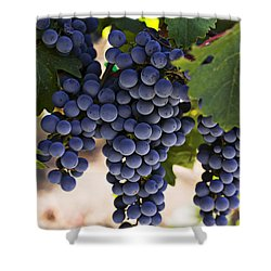 Sauvignon Grapes Shower Curtain by Garry Gay