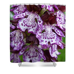 Savage Orchid 2 Shower Curtain by Jean Bernard Roussilhe