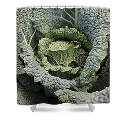 Savoy Cabbage In The Vegetable Garden Shower Curtain by Carol Groenen